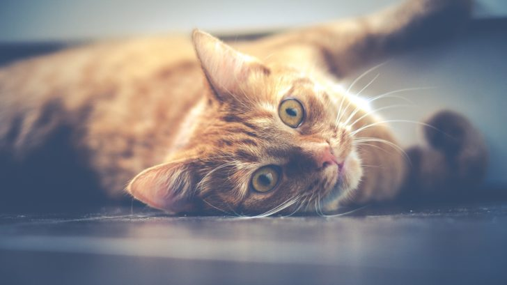 Katzengeschirr kaufen