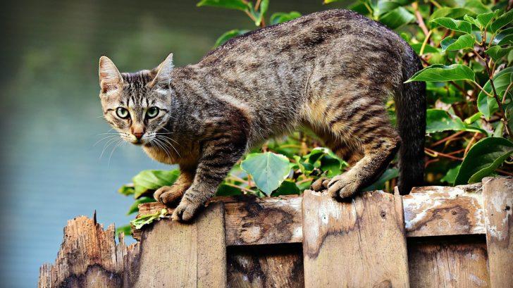 Katzenleckerlies kaufen